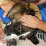 Plaukų šalinimas prieš operaciją