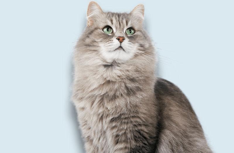 cat123